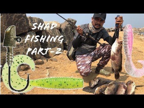 Shad Fishing Part-2