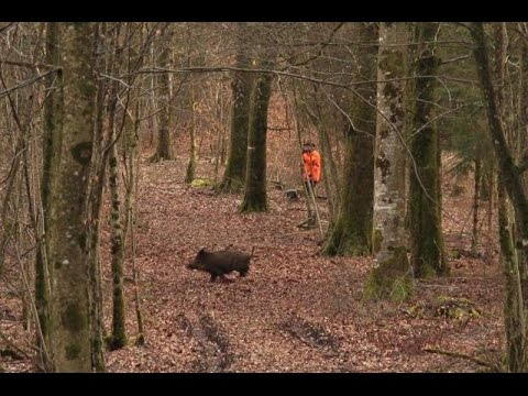 BEST OF tirs sangliers  - saison 2015  - ChasseTV