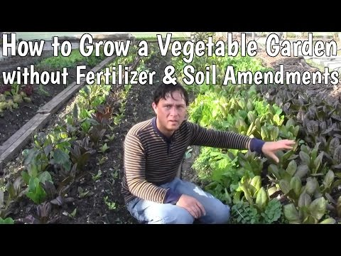 How to Grow a Vegetable Garden without Fertilizer & Soil Ame