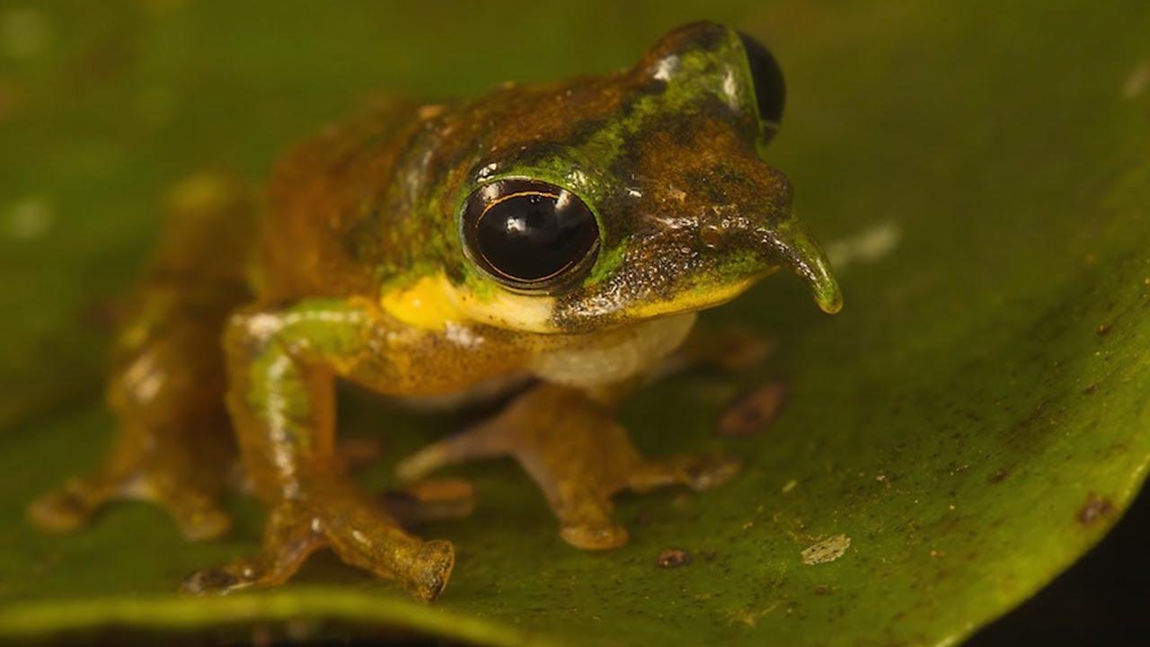Наличие Животных Сложно | домашние экзотические животные видео