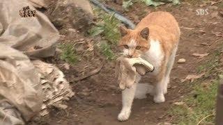 [Why] 매일 목장갑을 물고 오는 고양이 @TV동물농…