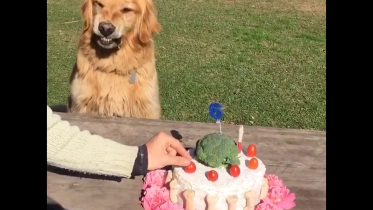 This Dog Does NOT Like People Touching His Birthday Cake