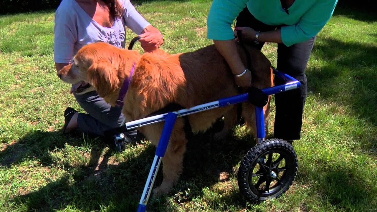 Walkin Wheels Dog Wheelchair Front Wheel Attachment Two Person