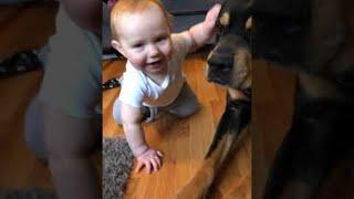 Dog and Little Boy are Best Buds || ViralHog