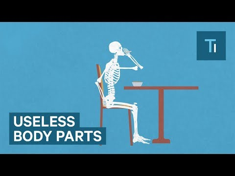 5 useless human body parts left over from evolution
