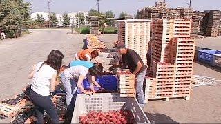 Greek farmers suffer in economic war between Russia and EU