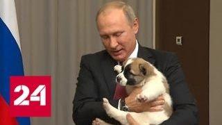 Бердымухамедов подарил Путину алабая по кличке Верный - Россия 24