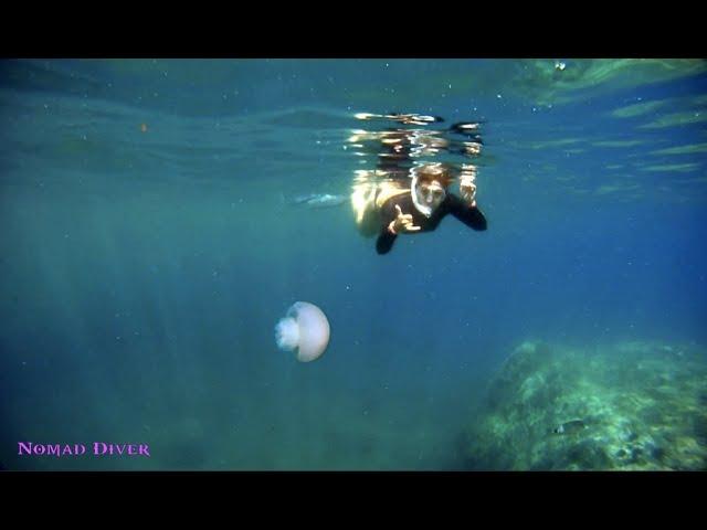 Visite du sentier sous marin de Peyrefite by Nomad Diver