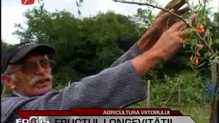 Goji Land Romania on Prima TV News - Focus