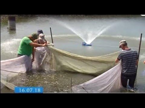 ТРК ВіККА: Кременчуцьке водосховище поповнили 350 тисячами мальків коропа
