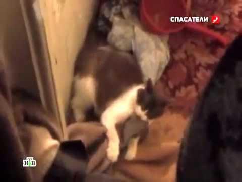 Бешенство домашней кошки