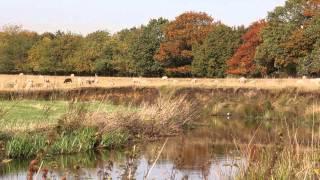 Drentsche Aa -  Drenthe - muziek Stef Bos