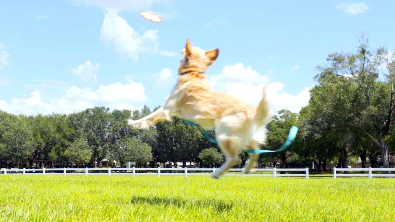 Teaching How To Catch A Frisbee! (super Cooper Sunday #102)
