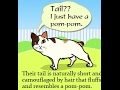 Interesting Facts About the Very Friendly Japanese Bobtail Cat