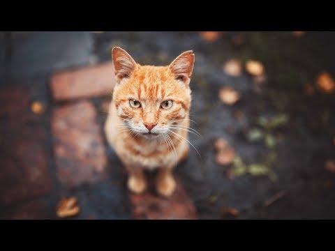 Есть ли у кошек совесть?
