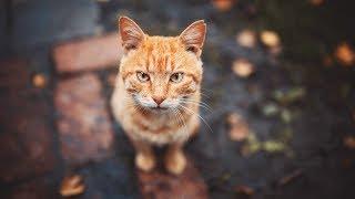 Есть ли у кошек совесть ?