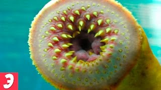 Самые Интересные Растения - факты