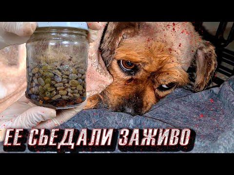 На собаке были тысячи клещей😱, 5 дней она не ела. Спасение бедняги🥺🙏