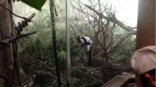 Esto es la selva!! - vlog Central Park Zoo