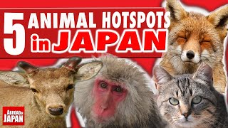 5 Must See Japanese Animal Hotspots
