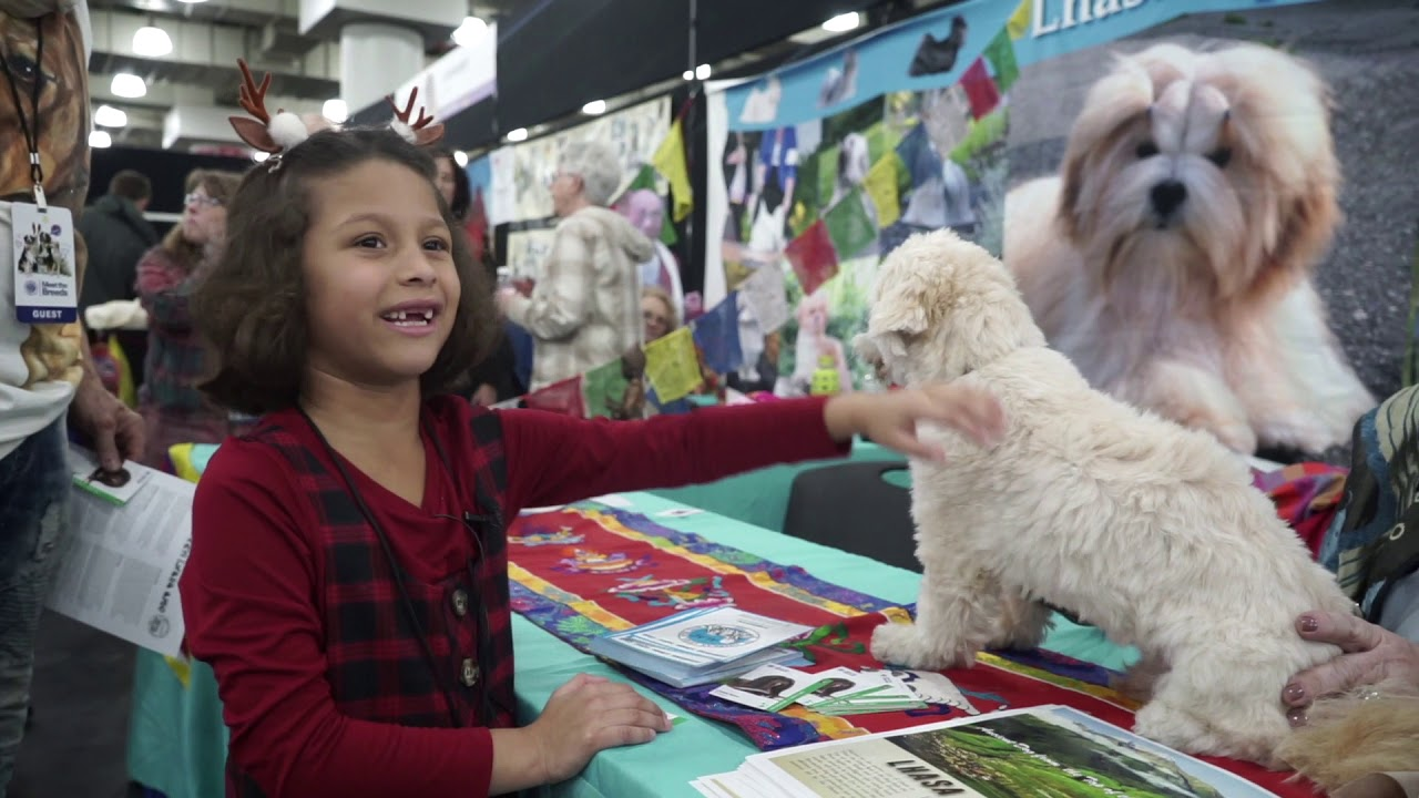 Meet the breeds by AKC at Javits Center New York