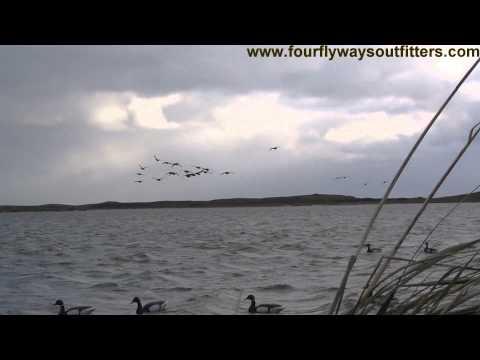 Sea Duck, Brant And Ptarmigan Hunting In Alaska