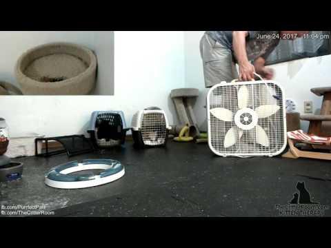 Hurricane Kittens -