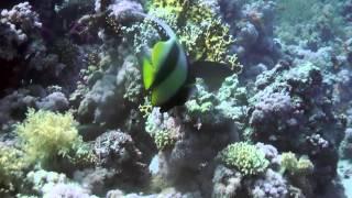 Egitto, Sharm el Sheikh: immersioni tra i colori della barriera corallina