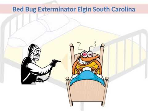 Expert of Bed Bug Exterminator Elgin SC