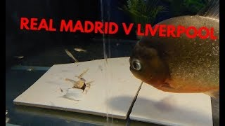 UEFA CHAMPIONS LEAGUE 2018 PREDICTION by REG the PIRANHA