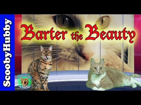 Barter the Beauty -- Cat Clips #279