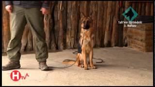Köpek Eğitimi 3 - Dostlarımız
