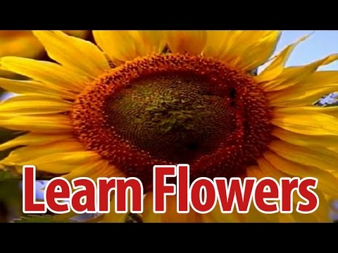 Learn Names Of Flowers In Malayalam Flower Names In Animation
