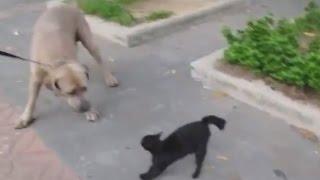 Кошка защищает своих котят