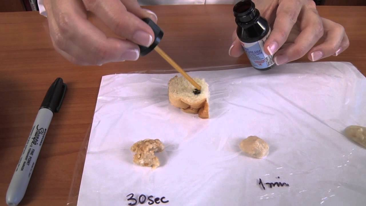 amylase experiments saliva and cracker videos activities