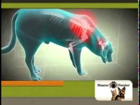 Neater Feeder Raised Dog Bowls As Seen On TV Commercial
