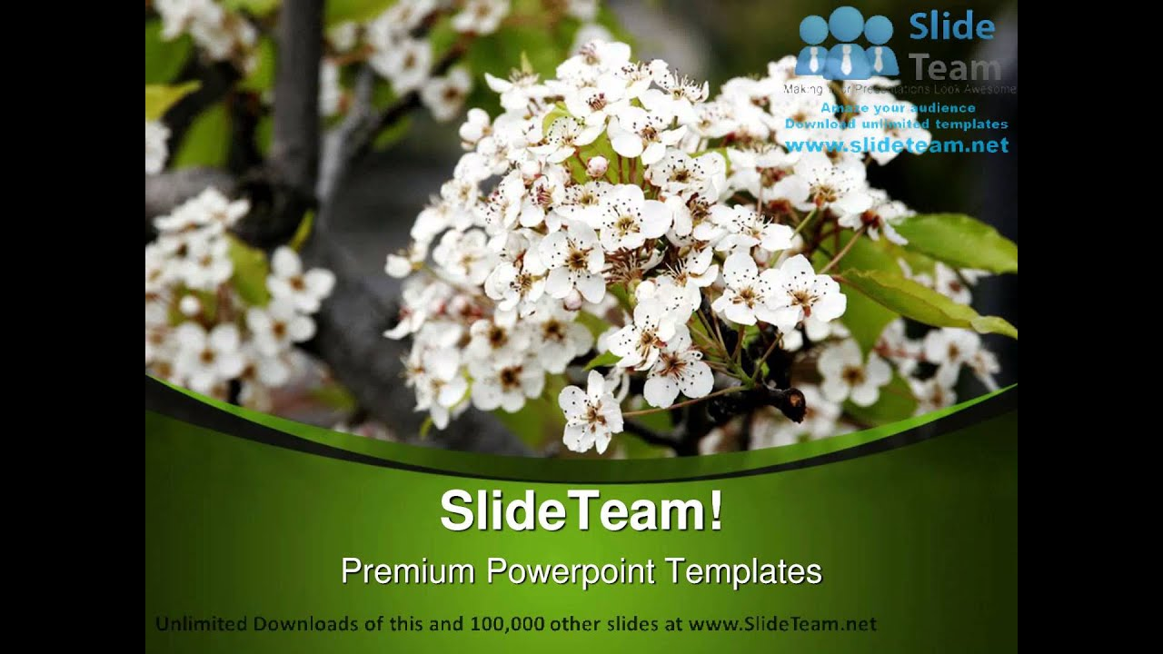 Beautiful White Flowers Nature Powerpoint Templates Themes