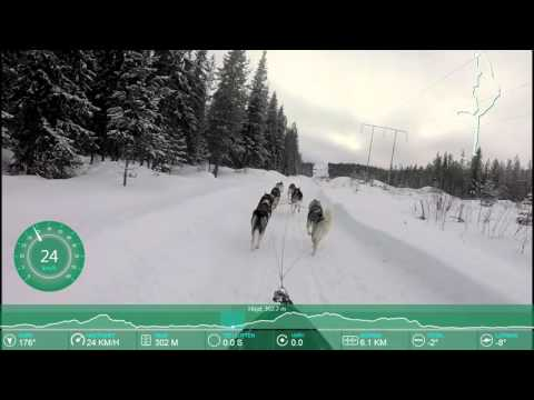 SLEDDOG- Going for Gold - Marie Isaelsson