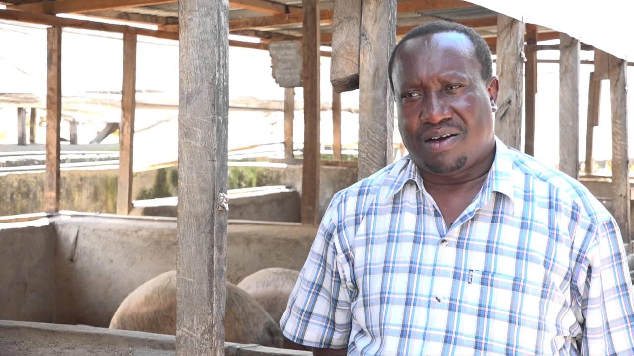 Profitable Pig Farming Secret In Kenya Un Editted Youtube