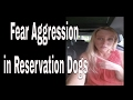 Fear Aggression in Reservation Dogs