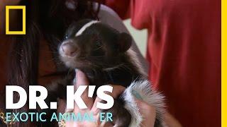 Sidelined Skunk | Dr. K's Exotic Animal ER