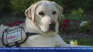 George Bush's Service Dog Takes Emotional Final Journey