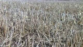 видео Севооборот - основа сохранения плодородия