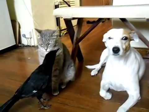 Cat and Dog fed by Bird (funny)