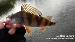 В поисках окуня на рыбалке помогает Тоиртап