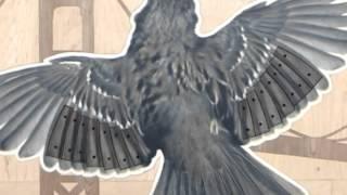 "Audio Tour: Walter Kitundu, ""bay Area Bird Encounters"", 2011"
