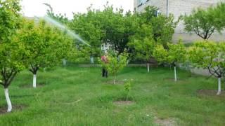 Առողջ Այգի Բույսերի պաշտպանություն Healthy Garden plant protection