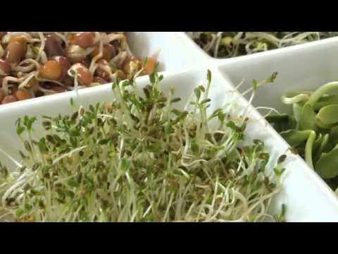 Sam Graci 2 Greens+ Superfood - Community Natural Foods