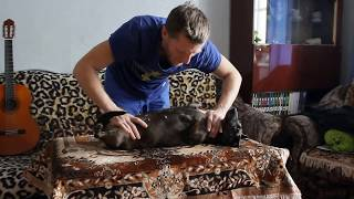 Как усыпить собаку