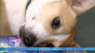 """Профессия ветеринар (Сюжет программы """"Деловое утро"""", телеканал НТВ)"""